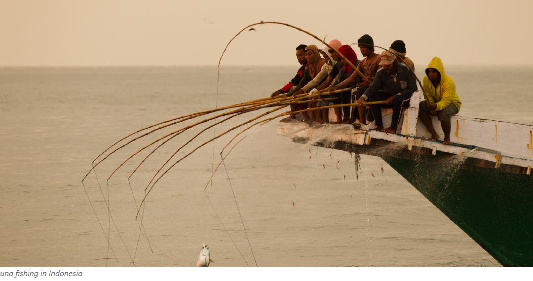 Indonesia's P&L Tuna Industry: Efforts for Survival